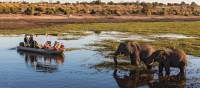 Wildlife viewing in Chobe River | Peter Walton