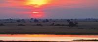 Beautiful colours on the bank of the Chobe river | Peter Walton