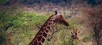 Kenya's national parks offer excellent wildlife viewing | Trent O'Donnell