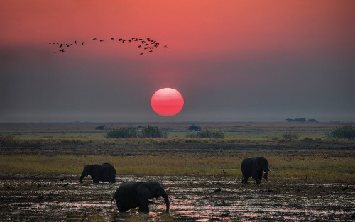 Breathtaking sunset over the African plains - <i>Photo: Peter Walton</i>