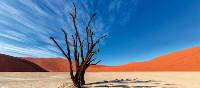Colours of Deadvlei | Peter Walton