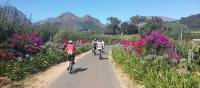 Spring cycling in the Cape Winelands