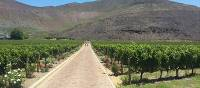 Cycling in the Cape Winelands | ITT
