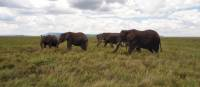 A herd of elephants in the Serengeti National Park | Kylie Turner
