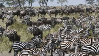 The Great Migration | Ian Williams