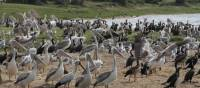 A huge number of birds are found in the Kazinga Channel | Ian Williams