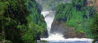 The lush vegetation and powerful waters of Murchison Falls