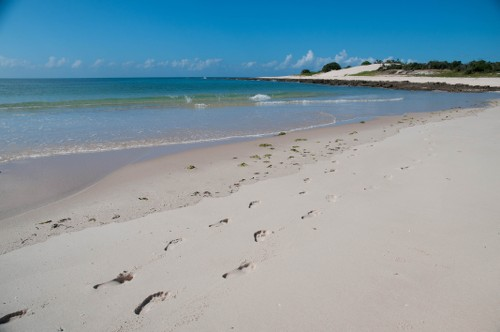 Footprints along the coast of Mozambique - <i>Photo: Bruce Taylor</i>