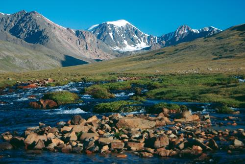 A lush alpine meadow high in the Harhiraa mountains of Mongolia - <i>Photo: Tim Cope</i>