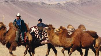 A traditional Mongolian camel herder | Campbell Bridge