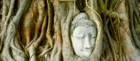 Buddha Head imbedded in tree roots at Wat Phra Mahathat, Ayuthaya, Thailand | Sue Badyari
