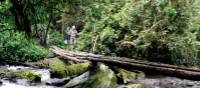 Makeshift bridge along the Kokoda Track | Ken Harris