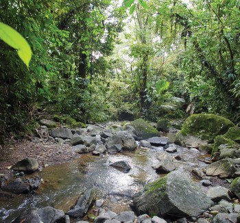 Rainforest trails - <i>Photo: Sophie Panton</i>