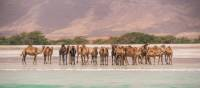 Camels at Salalah | Frances Howorth