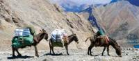 Three little donkeys enjoying the view | Natalie Tambolash