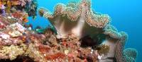 Stunning coral colours under the sea