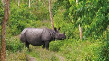 Viewing the majestic Asiatic Rhino in its natural habitats | Zac Kostos