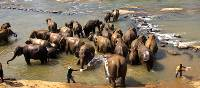 Elephants enjoying a nice refreshing bath | Alex Robertson