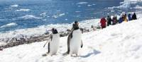Life on the Western peninsula of Antarctica | Learna Cale