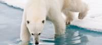 Our Arctic adventures offer unique wildlife experiences | Sue Josephsen