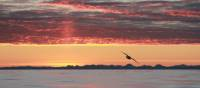Varied colours of sunset in the Arctic | Rachel Imber