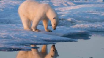 A lone polar bear roams the Russian Arctic | ©MKelly