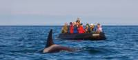 Whale watching in Russia's Far East