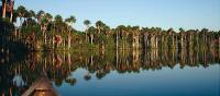 Cruising along the Amazon is the ideal way to spot wildlife | Bert Lozey