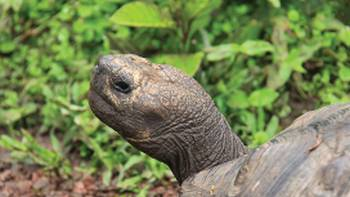 Native Giant Tortoise | Ken Harris