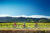 Cycling along the Nelson Great Taste Trail in New Zealand. Image credit: Dean McKenzie