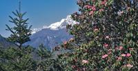 Annapurna and Everest Trek - Nepal holiday