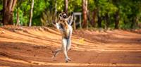 Find lemurs in Madagascar on a family holiday - World Expeditions