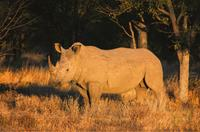 South_Africa-_Namibia-_Botswana_Safari-small