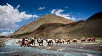 Camel crossing in Mongolia. Image credit: Cam Cope