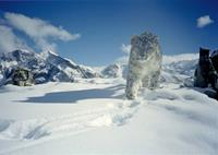 snow-leopard-5MB-image-(small)