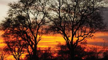 Sunrise on Moremi Game Reserve | Ashley Hewson