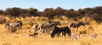 Wildlife viewing in Etosha National Park | Peter Walton