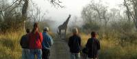 Early morning game viewing walk in Hlane National Park in Swaziland