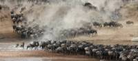 Breathtaking wildebeest migration though the Serengeti | Kyle Super
