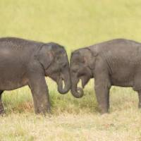 Visiting orphan baby elephants in Udawalawe |  <i>Houndstooth Studio by Alex Cearns</i>