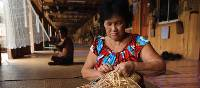 Local woman basket weaving in a traditional longhouse