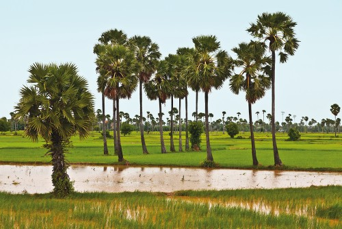 "Kompong Cham once known as ""The city of Gardens"" - <i>Photo: Peter Walton</i>"