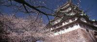 Japan's famous cherry blossom trees compliment the ancient Japanese architecture. | Richard I'Anson
