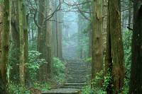 Misty morning hiking the Kumano Kodo