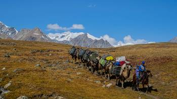 Camel train on the Mongolia Five Gods River and Trek Expedition with Tim Cope | Allan Kirk