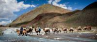 Camel crossing, Mongolia | Cam Cope