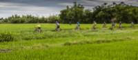Rice paddy cycling from Hue to Hoi An, Vietnam | Richard I'Anson