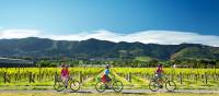 Cycling along the Nelson Great Taste Trail | Dean McKenzie