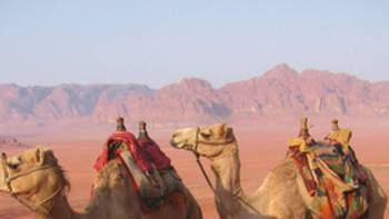 The best way to get around in the desert is by camel, Jordan | Stephanie Fradette
