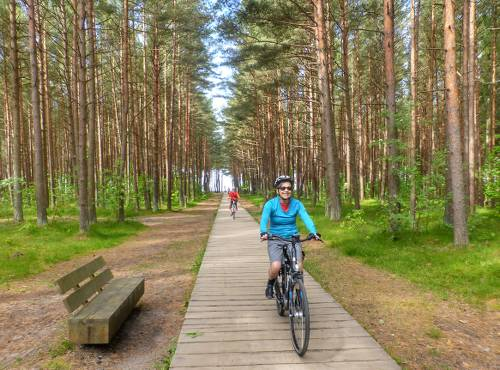 Our Baltic coast cycle will take you through Lithuania's lush northern pine forests - <i>Photo: Gesine Cheung</i>